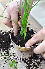 Cute DIY Mini-Garden Designs | playing in the dirt | Pinterest
