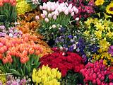This Spring flower garden has a great mixture of many different kinds ...
