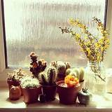 ... garden :-) Ideas, Cacti Garden, Cactus Collection, Window Sill