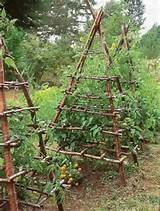 What a great idea for tomato trellises! Want for my tomato and squash ...
