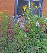 wildflower garden beautiful primitive gardens flowers ideas pi