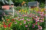 Lush perennial flower garden with daylilies Hemerocallis, Echinacea ...