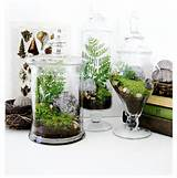 ... Decor / Plants, Pots and Indoor Fountains / Indoor Pots and Planters