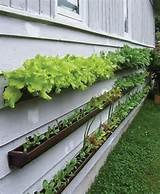 Pinterest gardening ideas