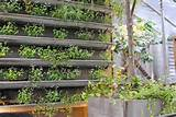 vertical gardening ideas vertical gardening ideas with iron pvc