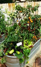 container vegetable gardening tips garden pinterest