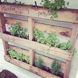 Platzsparende Ideen für einen kleinen Kräutergarten in der Küche