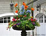 Brightly colored annual flowers spring and summer urn by Serendipity ...