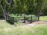 vegetable garden fence ideas gardening