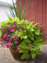 ... container flower garden ideas pictures container flower garden ideas