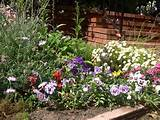 spring flowers garden ideas pinterest