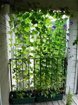Need Privacy? DIY Garden Privacy Ideas | The Garden Glove