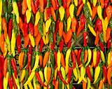 Pepper, Hot Mix | Secret garden dreams | Pinterest