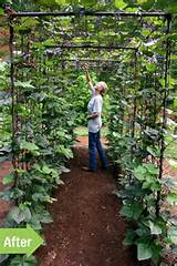 tunnel garden tunnel beans tunnel beautiful vegetable garden