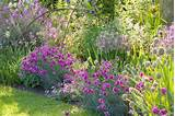 ideas plant combinations flowerbeds ideas spring borders summer