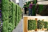 vertical garden0