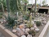from the botanical gardens is their beautiful cactus house part 2
