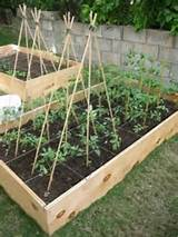 bamboo poles for organic and green home gardening