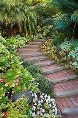going up walkway into california garden with succulent groundcover mix