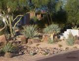 and a large cactus are always a good idea for any desert landscape