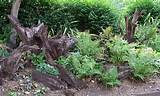 tree stump garden | memorial garden ideas | Pinterest