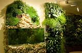 Picture of Indoor vertical garden decor flowers