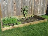 how to make a vegetable garden with limited space the innovation