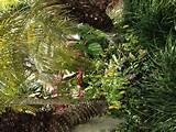 Florida garden. | Florida Style Gardening | Pinterest