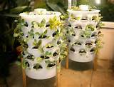 DIY Innovative Indoor Gardening Ideas | EASY DIY and CRAFTS