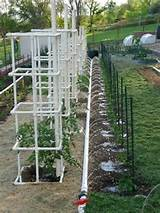 pvc watering ideas gardening pinterest