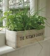 Kitchen Herb Garden Ideas by Ammazed | Home & Garden ideas | Pinterest