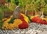 Garden design with mums, fall yard landscaping ideas celebrating ...