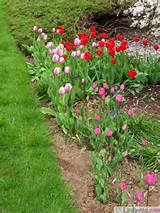 spring yard landscaping with evergreen plants and spring flowers