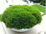 pogo pandas in a giant bowl low bowls concrete pots design concrete