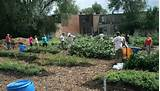 no supermarkets but 130 community gardens to help nourish a city
