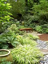 great garden combo 6 beautiful plants for a shady wet site