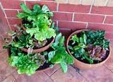 Great gardening ideas – Container Salad Gardens