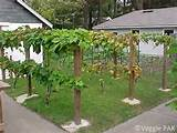 more small grape arbor ideas | Garden Ideas | Pinterest