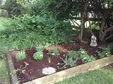 herb garden my garden ideas and likes pinterest