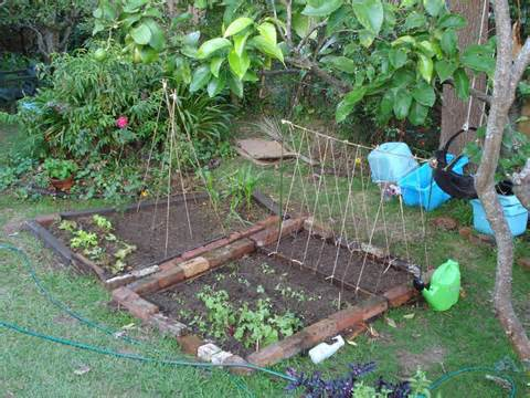 Ewa in the Garden: 15 ideas of DIY pea trellis