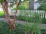 Related Images of How to Build Garden Fence Ideas