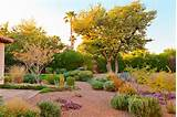 Dazzling Desert Landscaping method agave backyard desert ground cover ...