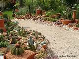 Cactus Garden | yard ideas | Pinterest