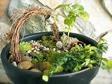 Cute Indoor Fairy Garden | gardening ideas | Pinterest