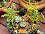 miniature gardens don t have to be expensive you may already