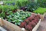Huerta Urbana- Horta Urbana- | Garden ideas⚘ ideas para ...