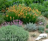 agave and xeriscaped flowers | Gardening Ideas | Pinterest