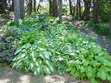 woodland garden backyard ideas pinterest