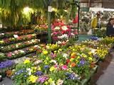 Home & Garden | Home & Garden | Pinterest