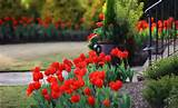 8f0cd__tulip-flowers-spring-flower-beds-yard-landscaping-ideas-2.jpg